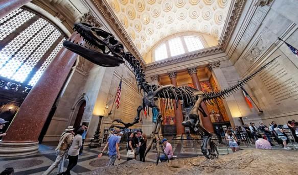 Dinosaur at AMNH